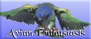 Avian Enthusiasts Logo
